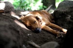 Dog tired at Casa Brujula